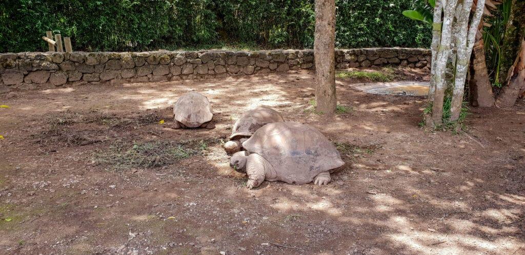 Kæmpe skildpadder